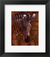 Safari Zebra Framed Print
