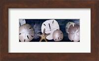 Framed Sandollars