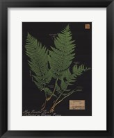 Framed Hay Scented Fern