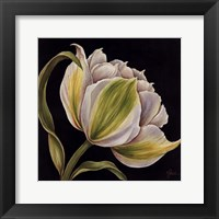 Framed Fleur Blanche