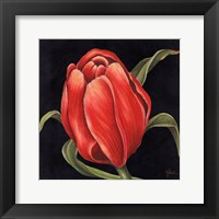 Framed Tulipe Rouge