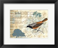 Bird Brained IV Framed Print