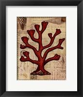 Red Coral IV Framed Print
