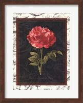 Framed Toile Botanical I