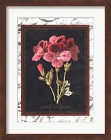 Framed Toile Botanical II