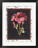 Toile Botanical II Framed Print