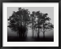 Framed Gathered Trees