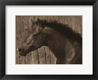 Framed Bayhorse