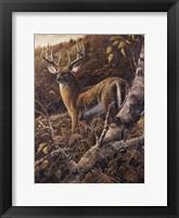 Framed Duke of Autumn