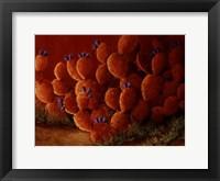 Framed Orange Prickly Pear