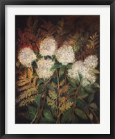 Framed Hydrangeas and Ferns