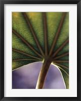 Framed Ricepaper Plant-7