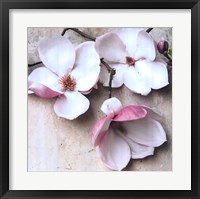 Framed Magnolia Diva II
