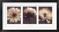 Framed Daisy/Dahlia