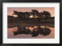 Framed Trees in Reflection I