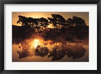 Trees in Reflection II Framed Print