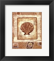Ship To Shore Shells II Framed Print