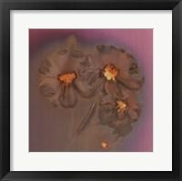 Framed Ghost Flowers II