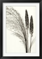 Broom Grass Framed Print