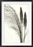 Framed Broom Grass