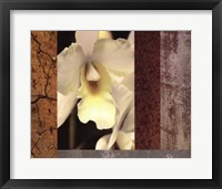Framed Tropical Whites I