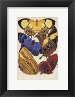 Collection IV Framed Print