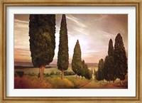 Framed Cypress Road, Siena