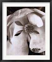 Magnolia No. 3 Framed Print