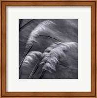 Framed Grasses In The Sky