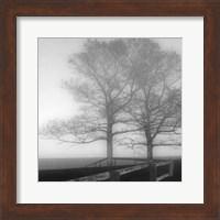 Framed Seaside Tree