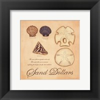Framed Sand Dollars