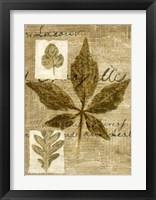 Framed Leaf Collage III
