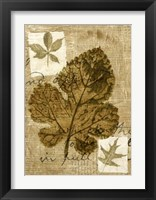Framed Leaf Collage IV