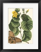 Framed Butterfly and Botanical I
