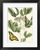 Framed Butterfly and Botanical II