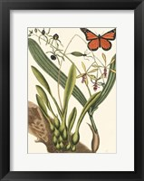 Framed Butterfly and Botanical IV