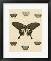 Heirloom Butterflies I Framed Print