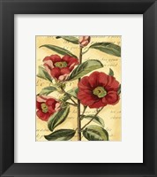 Framed French Camelia