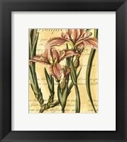 Framed French Iris