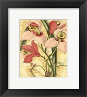 Framed French Orchid