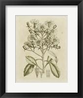 Framed Tinted Botanical I