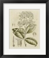 Framed Tinted Botanical III
