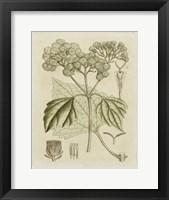Framed Tinted Botanical IV