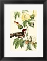 Framed Cuvier Exotic Birds I
