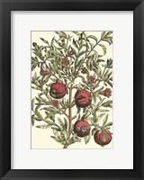 Framed Pomegranate Tree Branch