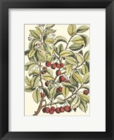 Framed Cherry Tree Branch
