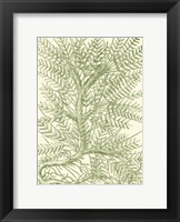Framed Mossy Branches III