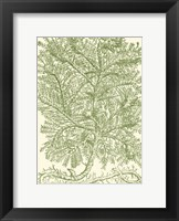Framed Mossy Branches IV