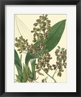 Framed Antique Orchid Study III