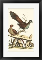Framed Regal Pheasants I